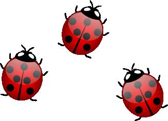 Groep-Liefeheerstbeestjes-duurzaam-produceren